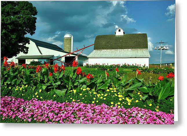 Summer On An Amish Farm Greeting Card