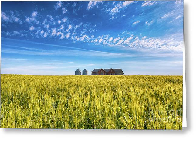 Summer On The Prairies Greeting Card by Ian McGregor