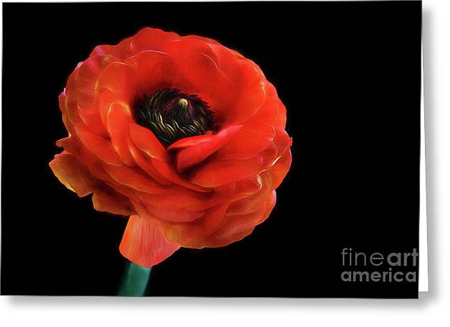 Greeting Card featuring the photograph Summer Orange by Darren Fisher
