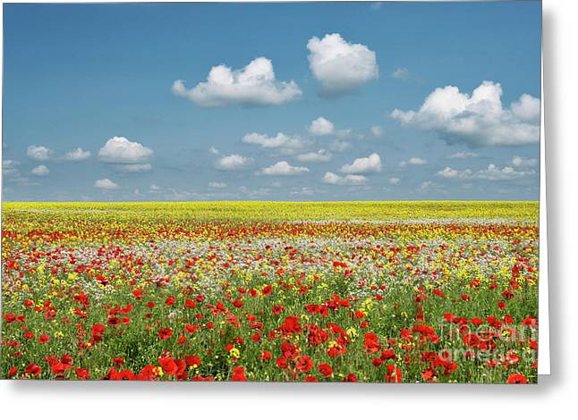 Summer Palette Greeting Card by Tim Gainey