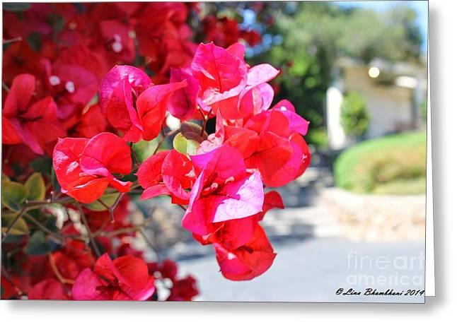 Summer Plants  Greeting Card