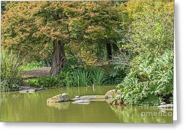 Summer Pond Greeting Card by Kate Brown