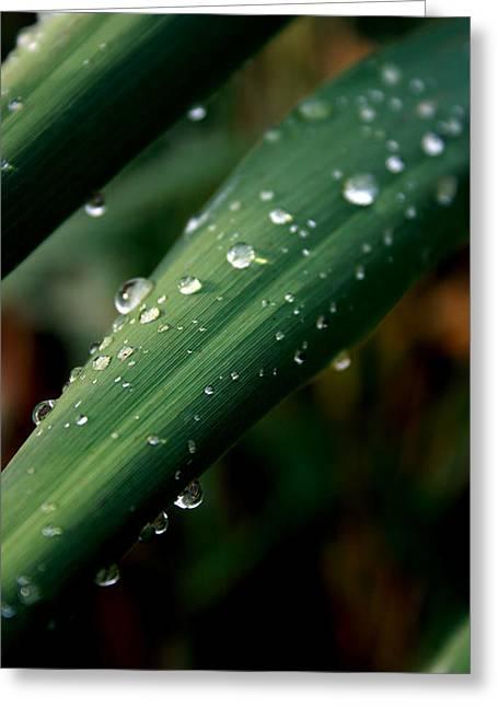 Summer Rain Greeting Card by Alexandra Harrell