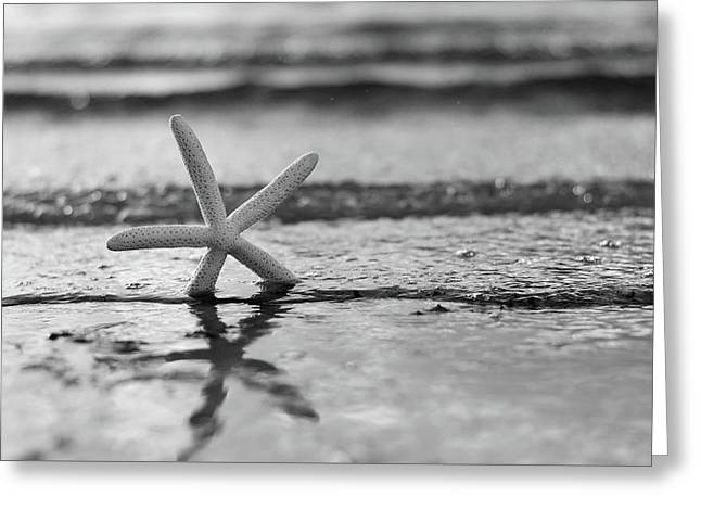 Summer Sea Star Black And White Greeting Card