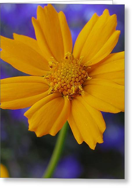 Carpel Greeting Cards - Summer Smile Greeting Card by Juergen Roth