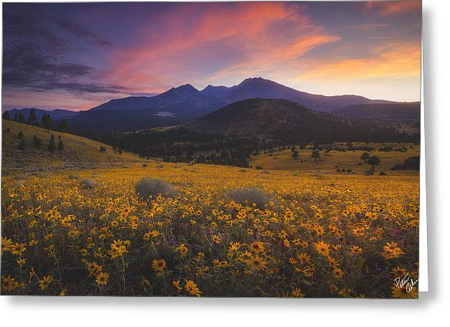 Summer Splendor Greeting Card by Peter Coskun