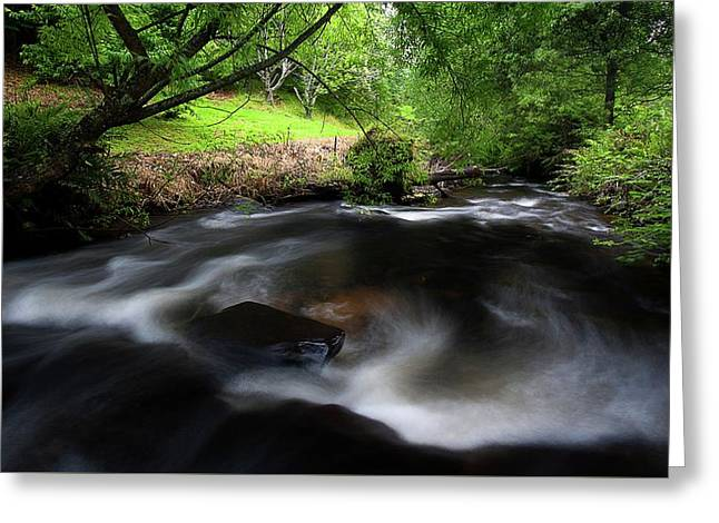 Summer Stream Greeting Card by Tim Nichols