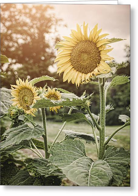 Summer Sun Greeting Card