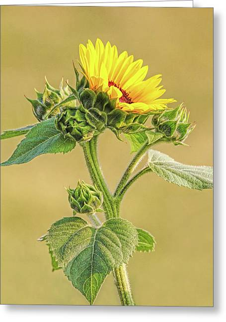 Summer Sunflower Floral Greeting Card