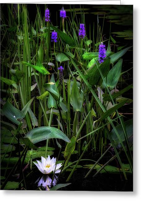 Summer Swamp 2017 Greeting Card by Bill Wakeley