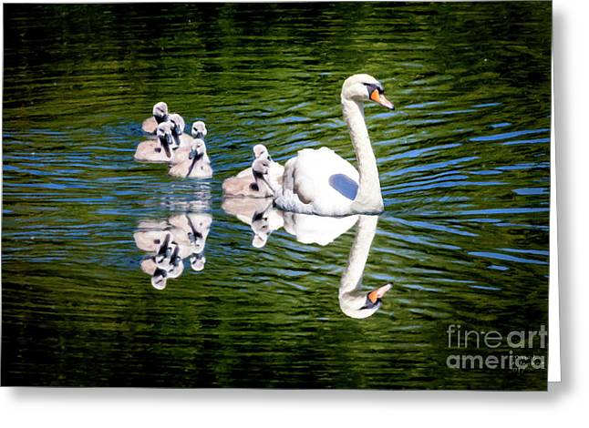 Summer Swans Greeting Card