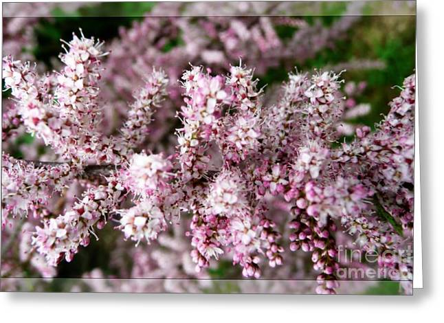 Greeting Card featuring the photograph Summer Tamarisk by Jean Bernard Roussilhe