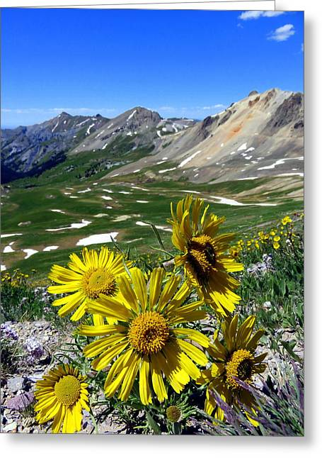 Greeting Card featuring the photograph Summer Tundra by Karen Shackles