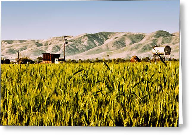 Summer Wheat Greeting Cards - Summer Wheatfield Greeting Card by Gilbert Artiaga