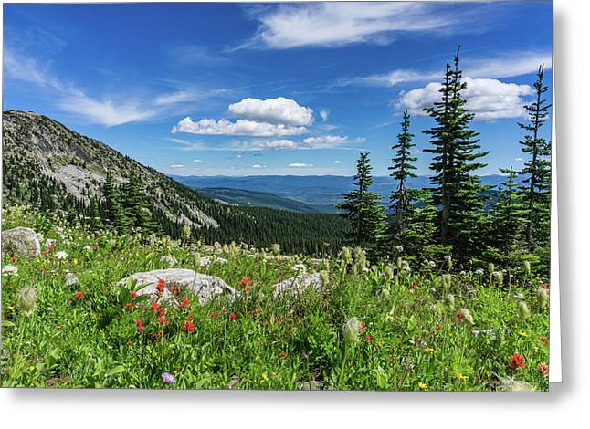 Summer Wildflowers On Big White Greeting Card