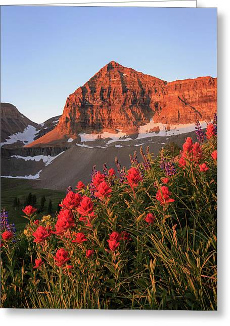 Greeting Card featuring the photograph Summer Wildflowers On Timpanogos. by Johnny Adolphson