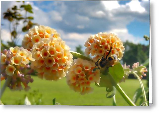 Greeting Card featuring the photograph Summer Work by Isabella F Abbie Shores FRSA