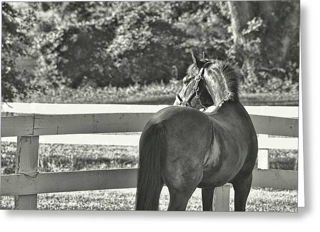 Greeting Card featuring the photograph Summer's Eve by Dressage Design