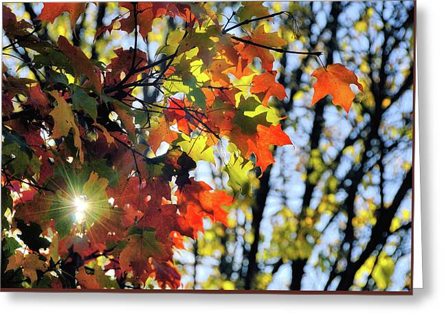 Summer's Gone Greeting Card by JAMART Photography