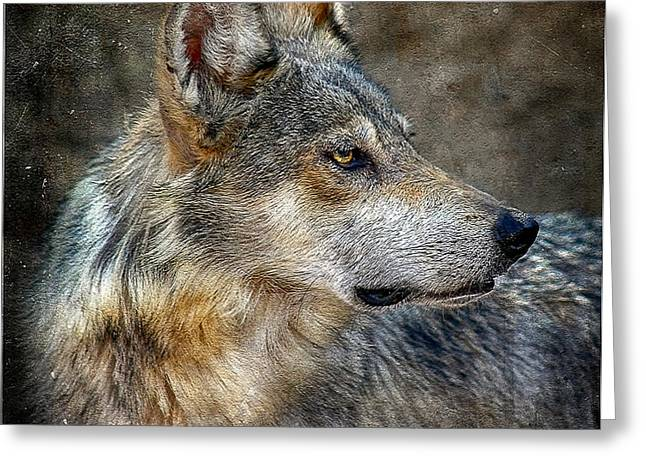 Summertime Coated Wolf Greeting Card