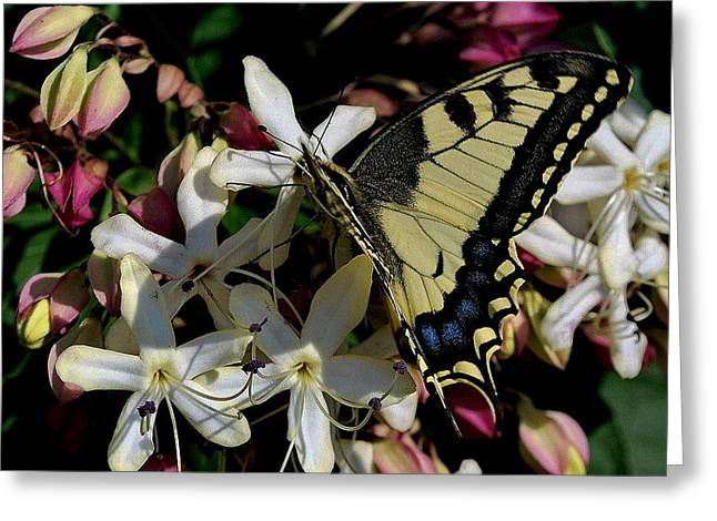 Greeting Card featuring the photograph Summertime by Marija Djedovic