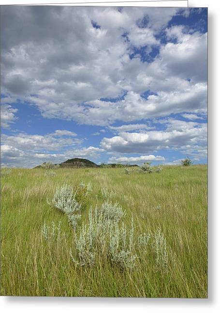 Summertime On The Prairie Greeting Card