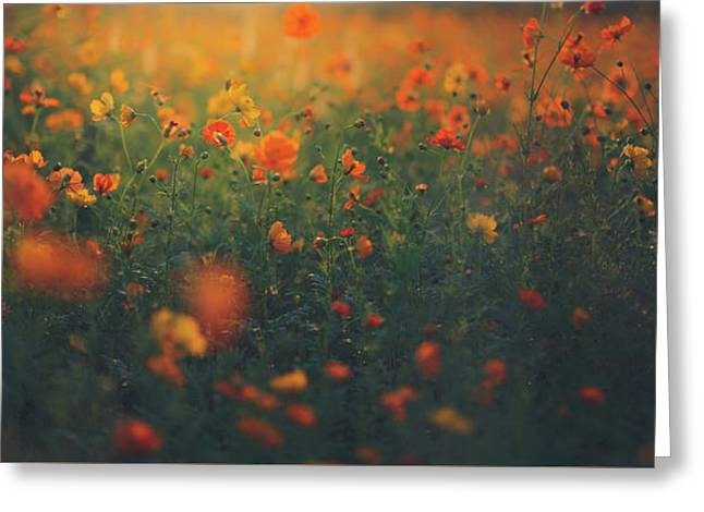 Greeting Card featuring the photograph Summertime by Shane Holsclaw