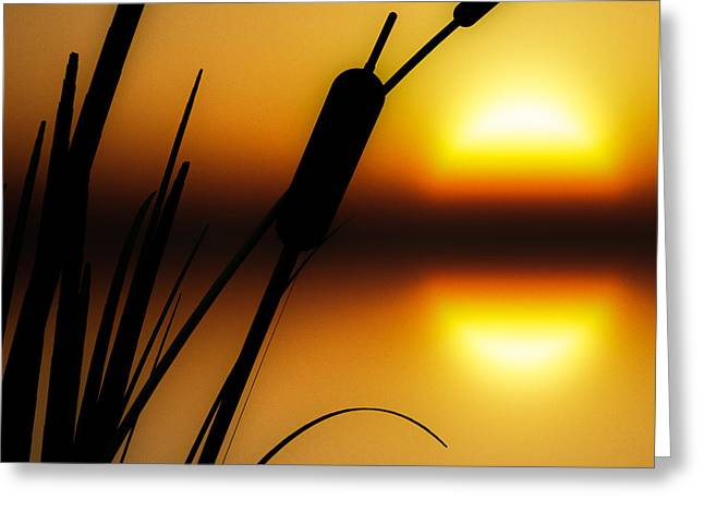 Summertime Whispers  Greeting Card by Bob Orsillo