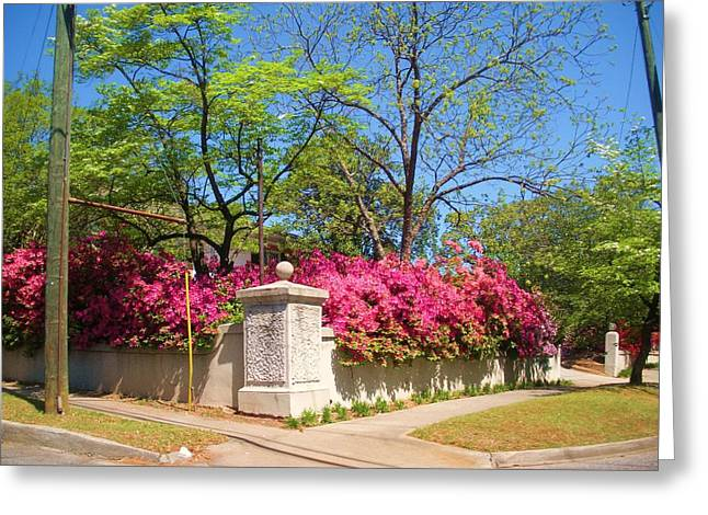 Summerville Sc Greeting Card by Jeanette Oberholtzer