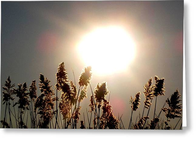 Sun And Grass 2  Greeting Card by Lyle Crump