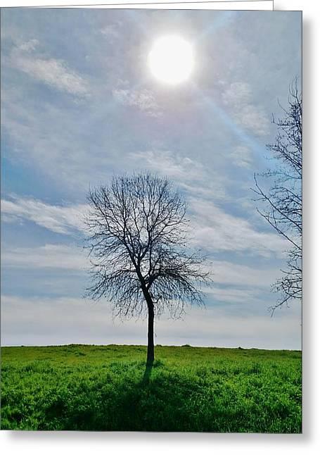 Sun And Tree Of Stillness Greeting Card