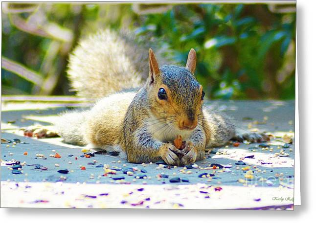 Sun Bathing Squirrel Greeting Card by Kathy Kelly