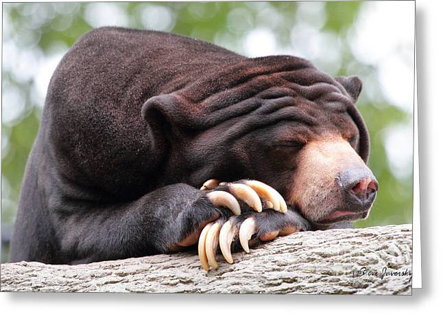 Sun Bear Greeting Card
