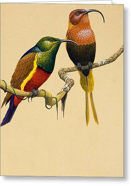 Nectar Greeting Cards - Sun Birds Greeting Card by English School