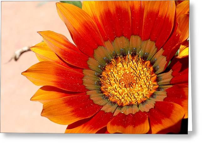 Sun Bloom Of Fire Greeting Card by Edan Chapman