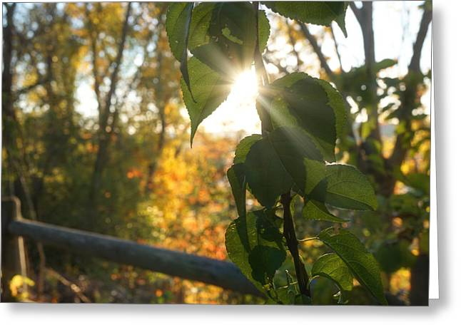 Sun Breaking Through The Leaves Greeting Card by Lilia D