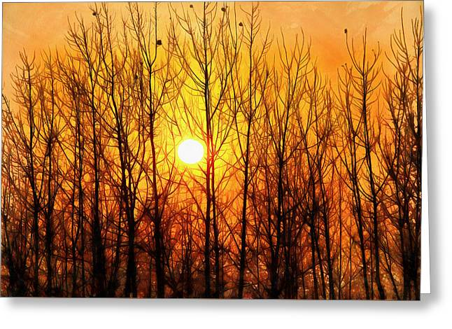 Sun Bursting Through Trees Greeting Card by Ashish Agarwal