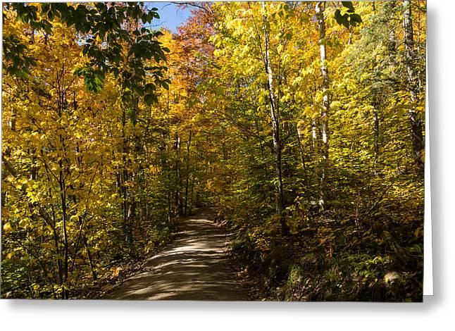 Sun Dappled Autumn Path - Enjoying A Sunny Forest Walk Greeting Card by Georgia Mizuleva