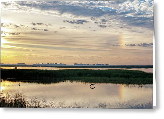 Sun Dog And Herons Greeting Card
