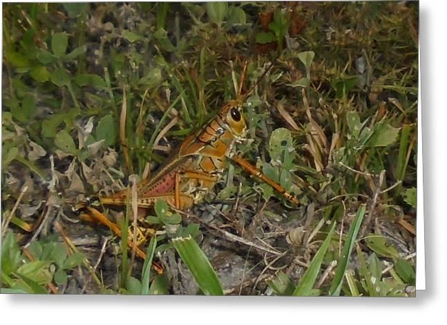 Sun Down Grasshopper Greeting Card