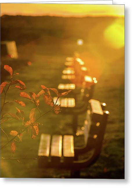 Greeting Card featuring the photograph Sun Drenched Bench by Darryl Hendricks