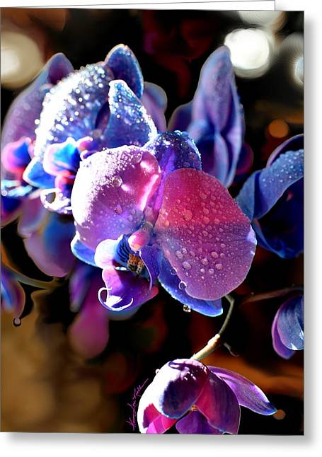 Sun Drenched Orchid Greeting Card