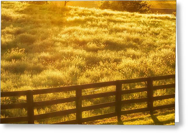 Sun-drenched Pasture Greeting Card by Mark Miller