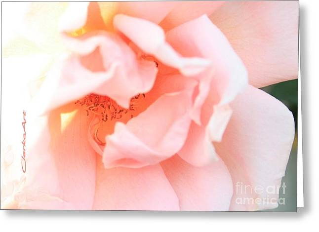 Sun-drenched Rose Greeting Card