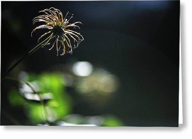 Greeting Card featuring the photograph Sun Fire by Wanda Brandon