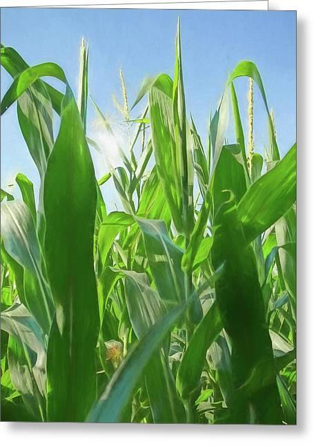 Sun Flare Through Corn Stalks Greeting Card