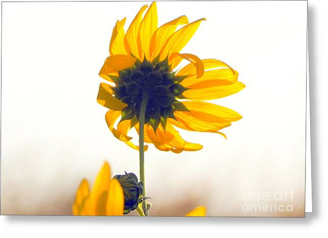 Sun Flower 101 Greeting Card