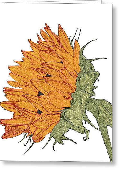 Sun Flower Study Greeting Card by I'ina Van Lawick