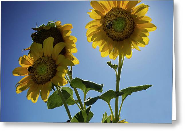 Greeting Card featuring the photograph Sun Flowers by Brian Jones