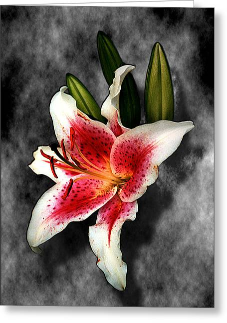 Sun Gazer Lily Greeting Card by Roger Soule